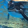 桃園水族館Xpark,桃園水族館,Xpark,水族館,桃園景點企鵝影片