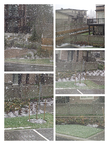 snow 1 -20120226