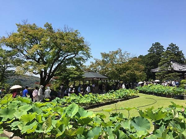 20170615三室戶寺 (78).JPG