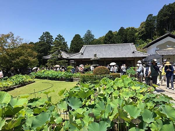 20170615三室戶寺 (79).JPG