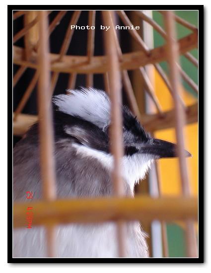 籠中鳥.jpg