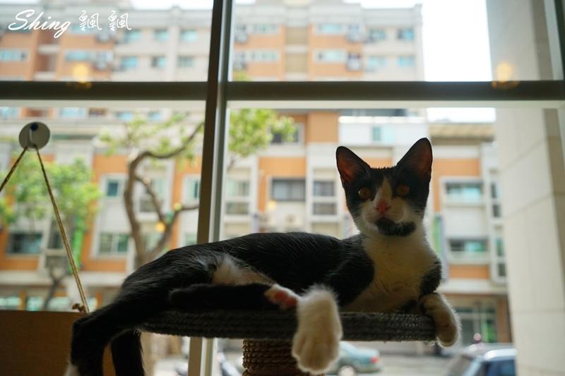 朵貓貓咖啡館 03.JPG
