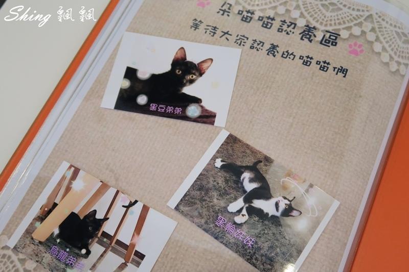 朵貓貓咖啡館 08.JPG