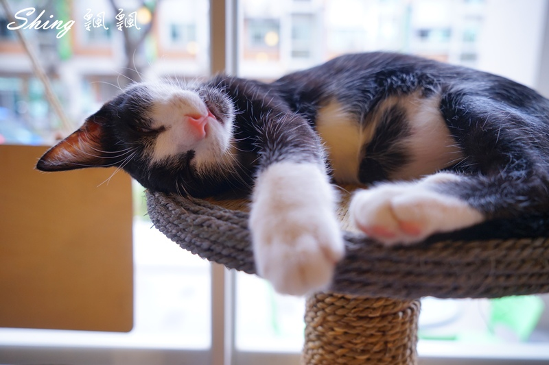 朵貓貓咖啡館 15.JPG