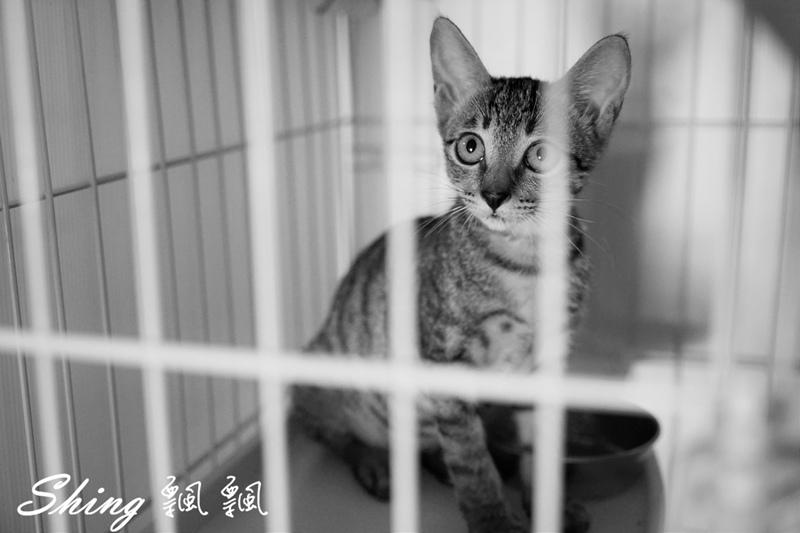 朵貓貓咖啡館 44.JPG