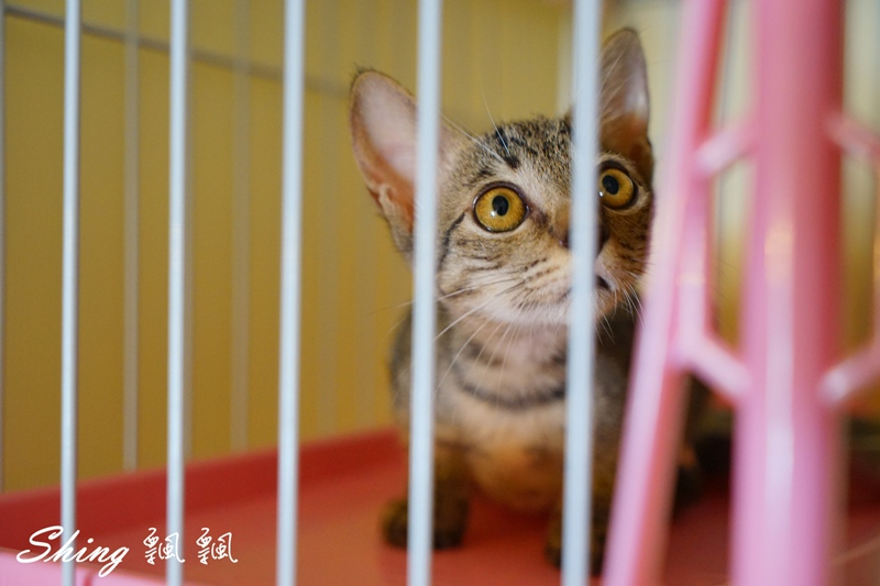 朵貓貓咖啡館 42.JPG