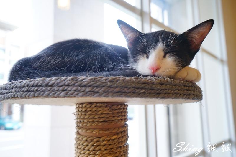 朵貓貓咖啡館 36.JPG