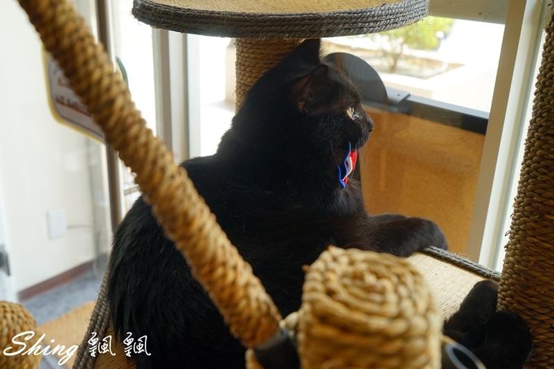 朵貓貓咖啡館 39.JPG