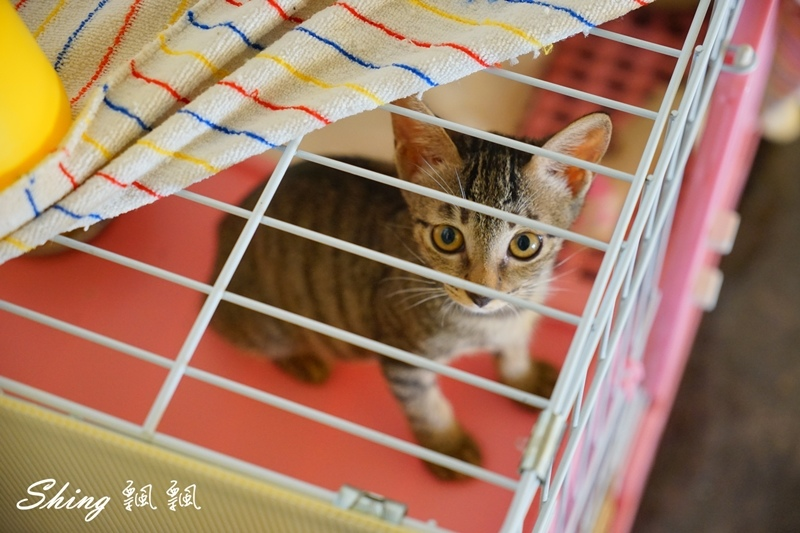 朵貓貓咖啡館 41.JPG