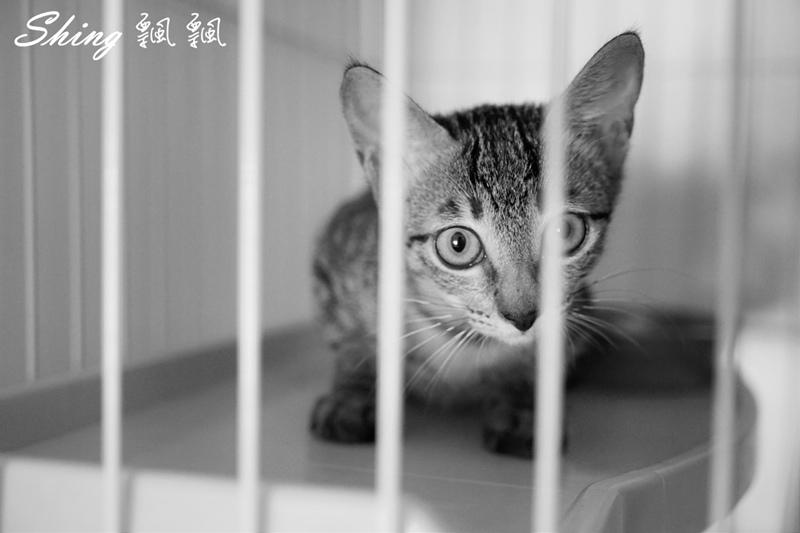 朵貓貓咖啡館 43.JPG