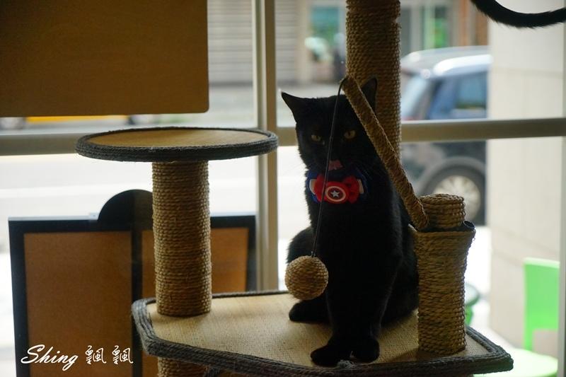 朵貓貓咖啡館 38.JPG