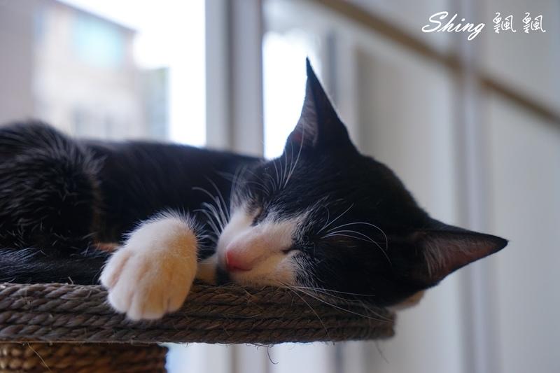 朵貓貓咖啡館 37.JPG