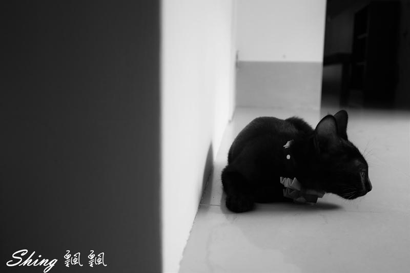 朵貓貓咖啡館 45.JPG