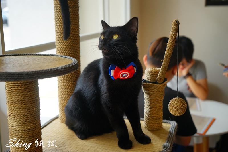 朵貓貓咖啡館 40.JPG