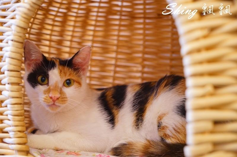 朵貓貓咖啡館 53.JPG