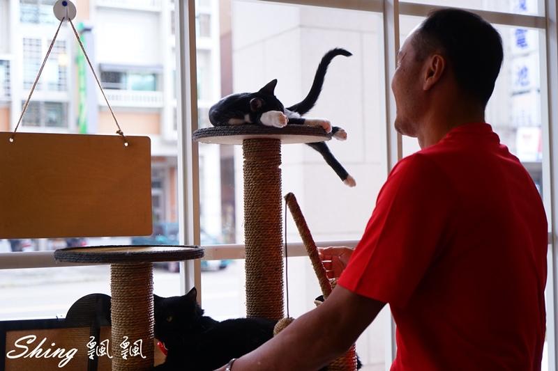 朵貓貓咖啡館 48.JPG