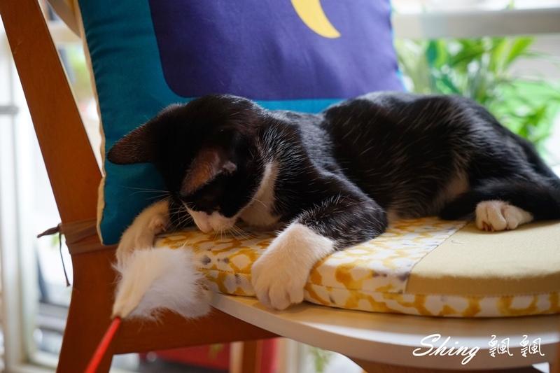 朵貓貓咖啡館 55.JPG