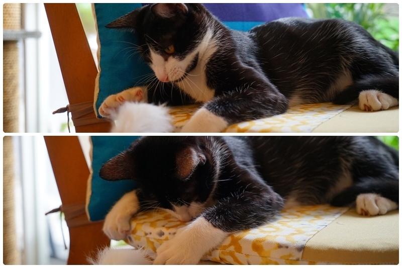 朵貓貓咖啡館 56.jpg