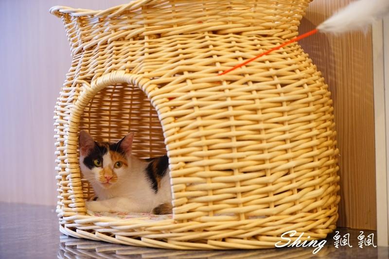 朵貓貓咖啡館 52.JPG