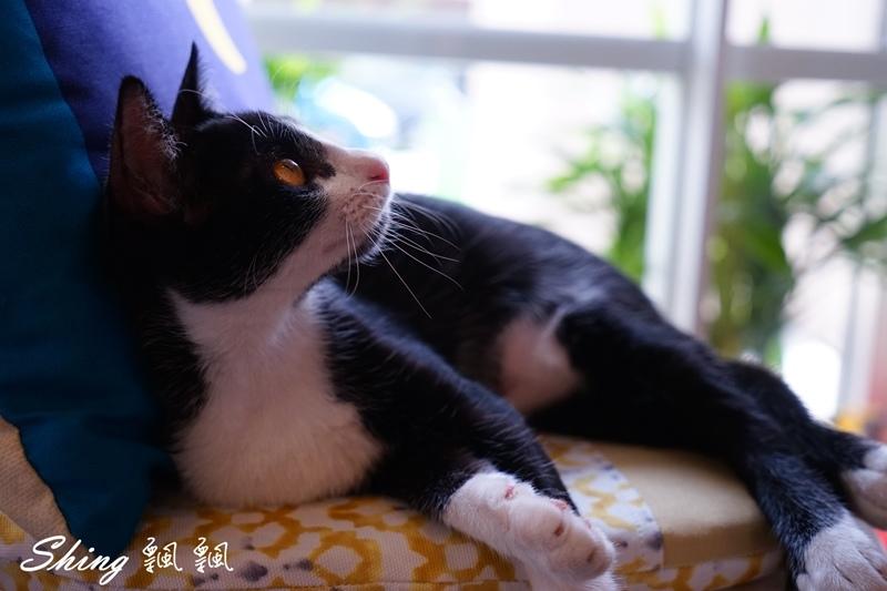 朵貓貓咖啡館 54.JPG