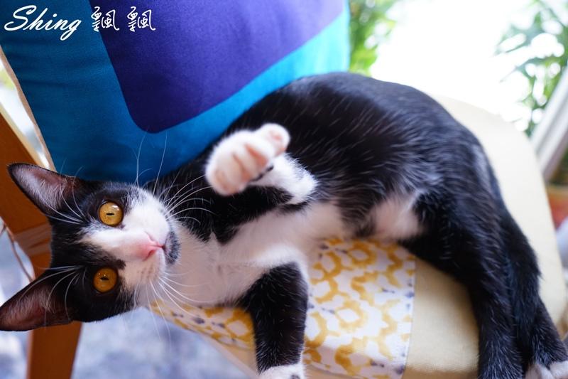 朵貓貓咖啡館 58.JPG