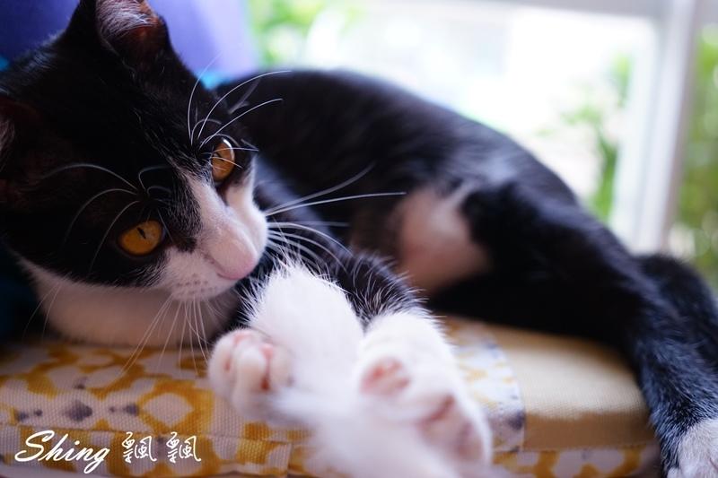 朵貓貓咖啡館 57.JPG