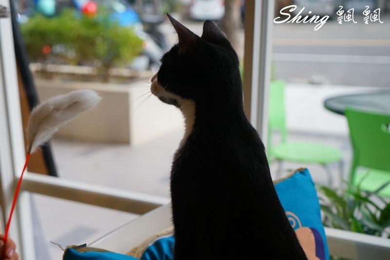 朵貓貓咖啡館 60.JPG