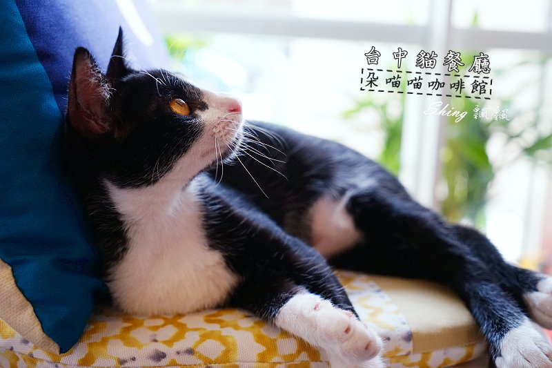 朵貓貓咖啡館 01.JPG
