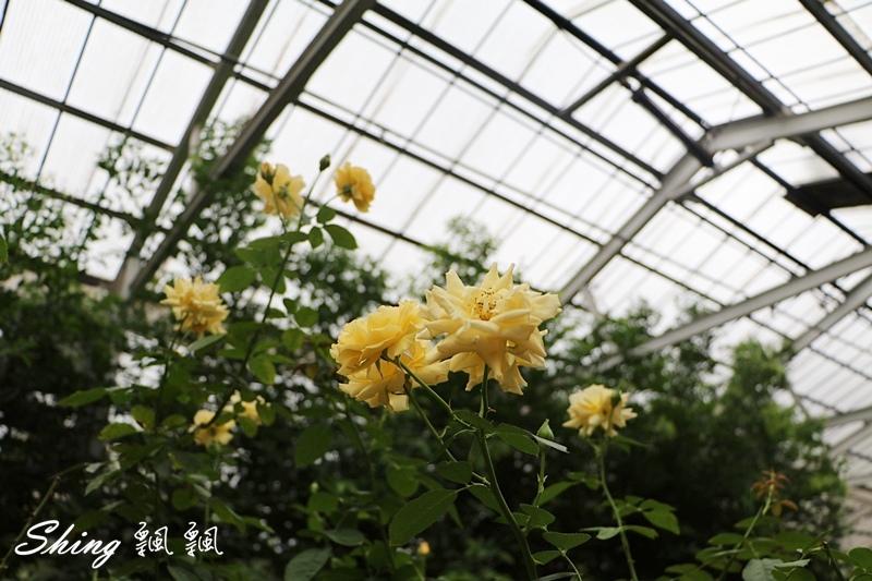 蘿莎玫瑰山莊ROSAHILL 28.JPG