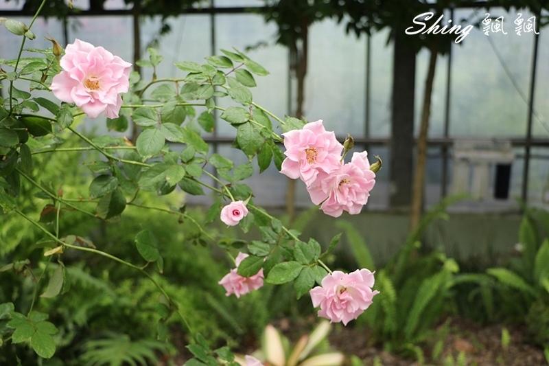 蘿莎玫瑰山莊ROSAHILL 31.JPG