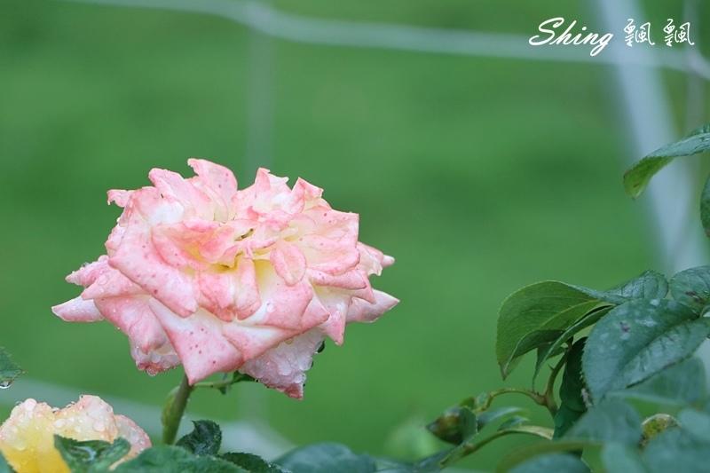 蘿莎玫瑰山莊ROSAHILL 52.JPG