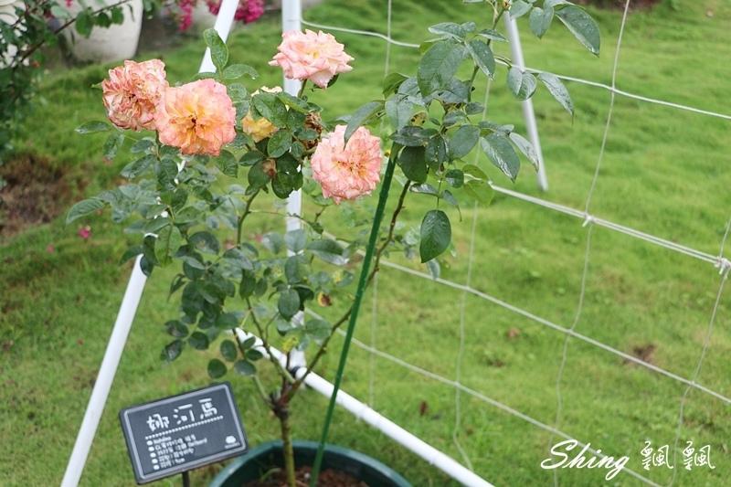 蘿莎玫瑰山莊ROSAHILL 51.JPG