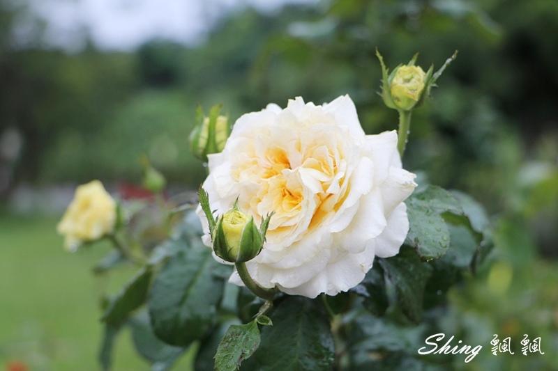 蘿莎玫瑰山莊ROSAHILL 61.JPG
