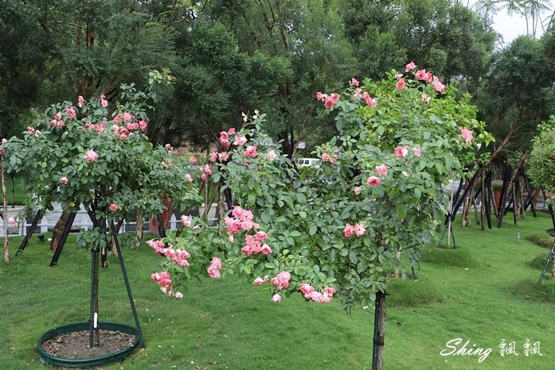 蘿莎玫瑰山莊ROSAHILL 65.JPG