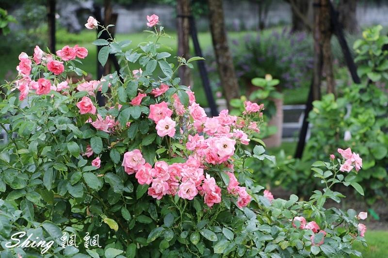 蘿莎玫瑰山莊ROSAHILL 68.JPG
