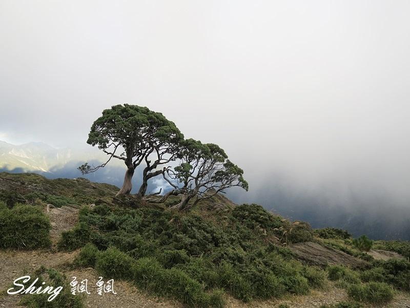 合歡山北峰 小溪營地露營140.JPG