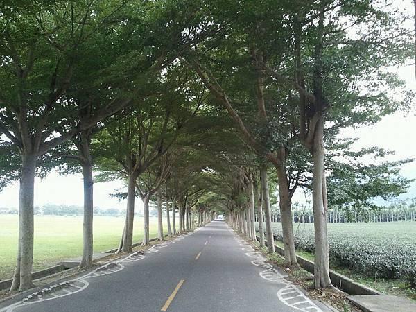 龍田村的綠色隧道.jpg