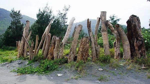 蘇花海岸古道的漂流木