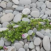 小巧可愛的鵝卵石