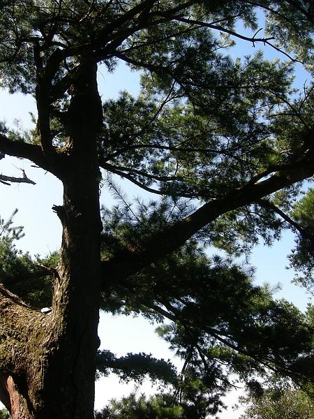 台美社登山隊大坑3號步道登山記 044.jpg