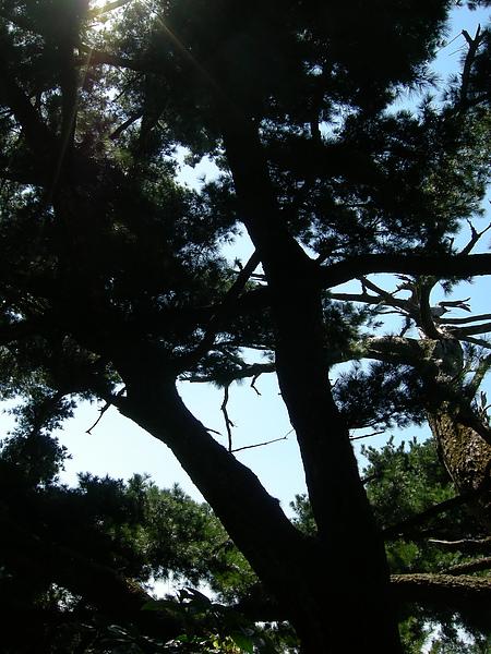 台美社登山隊大坑3號步道登山記 045.jpg