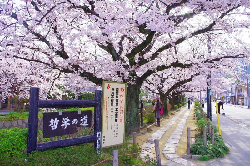 「哲學之道 櫻花」的圖片搜尋結果
