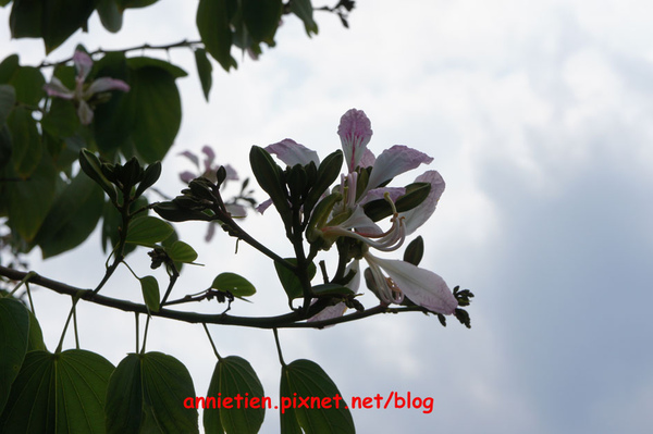 SONY NEX-3試拍花朵3.jpg