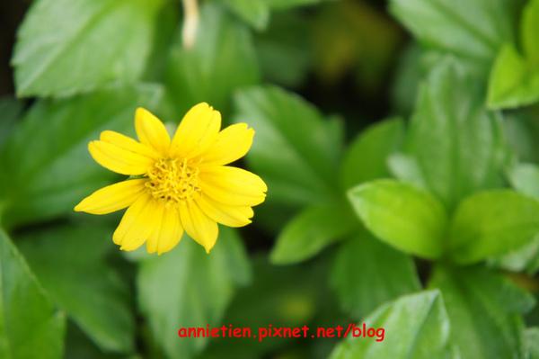 SONY NEX-3試拍花朵2.jpg