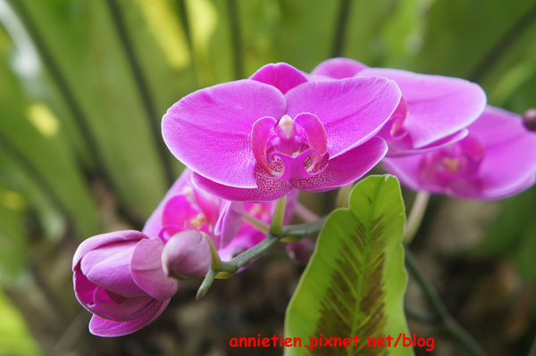 SONY NEX-3試拍花朵7.jpg