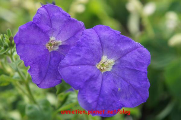 SONY NEX-3試拍花朵5.jpg