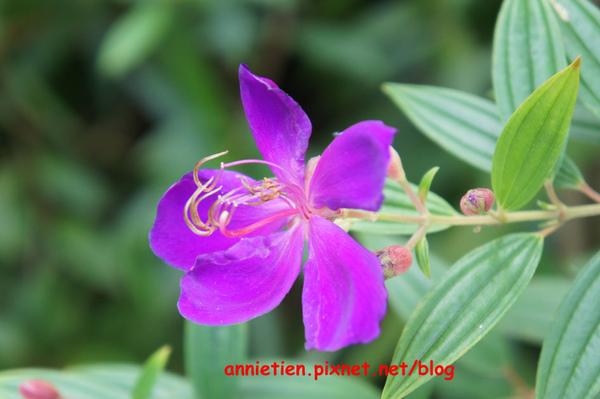 SONY NEX-3試拍花朵8.jpg