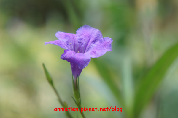 SONY NEX-3試拍花朵9.jpg