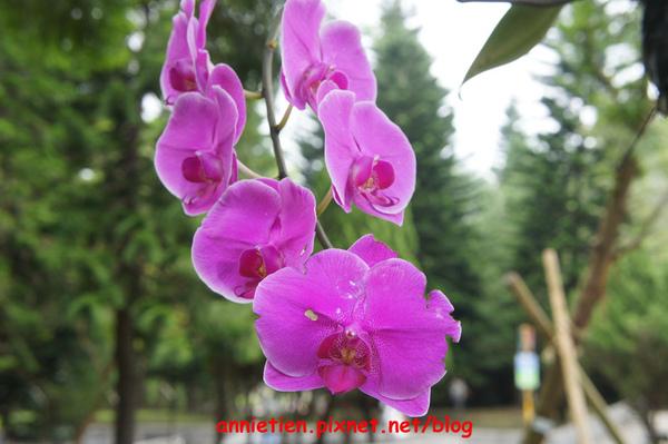 SONY NEX-3試拍花朵6.jpg