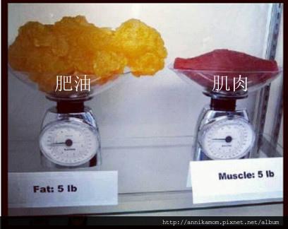fatandmuscle_副本